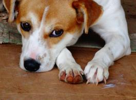 Prefeitura Municipal alerta sobre abandono de animais