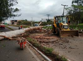 Prefeitura retira �rvore com risco iminente de queda